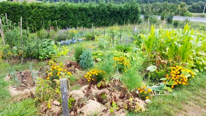 Huertas ecológicas de Urkabustaiz
